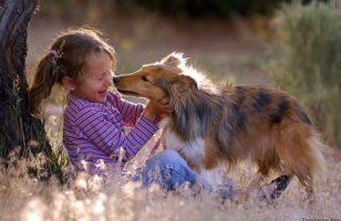 Gyógyítás az állatok segítségével