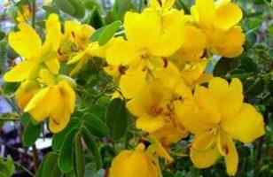 Az aranyér kezelése természetes módszerekkel