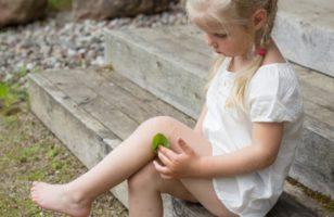 Kisebb sebek, sérülések gyógyítása gyógynövényekkel
